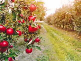 Obst-Erlebnis-Garten